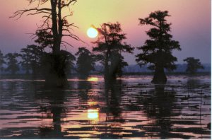 Caddo_At_Sunset1