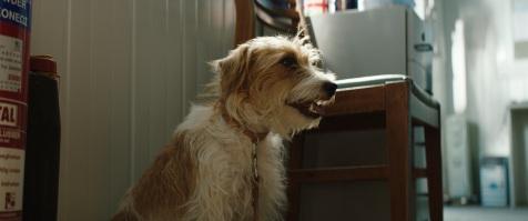 A still from SMUGGLING HENDRIX. ©AMP Filmworks.
